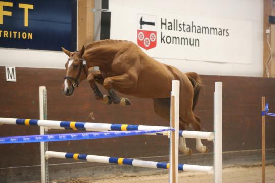 Jurist med kompetens inom häst