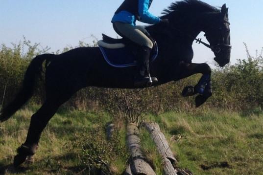 Vacker mångsidig Maxad D ponny