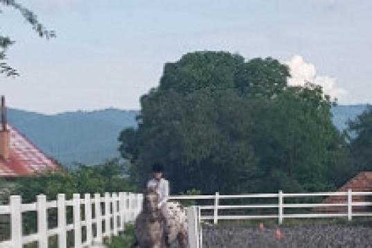 Medryttarhäst/medryttarponny sökes