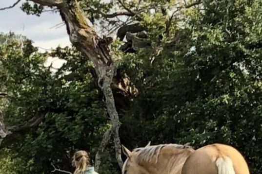 Söker medryttar ponny/liten häst.