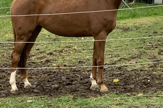 Framtidshopp - en häst for de stora klasser