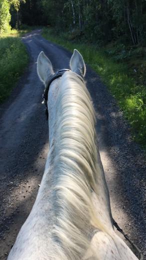 Hästar/ponnys köpes