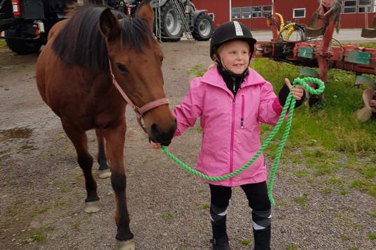 Söker foderhäst åt dottern.
