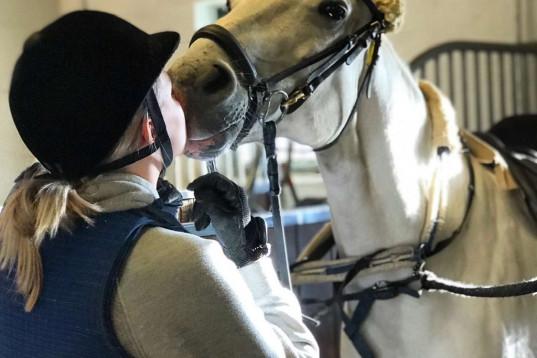 Söker häst att låna under 2021