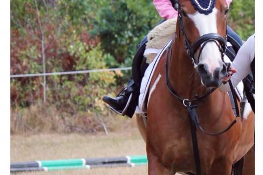Medryttare sökes 1dag / vecka till c-ponny
