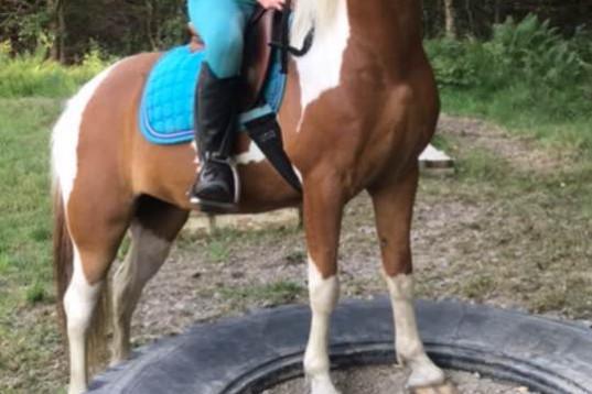 Härlig ponny med potential