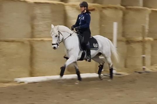 Välriden FEI ponny