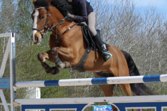 Supertrevlig Irländsk maxad D Ponny med bra hoppstam