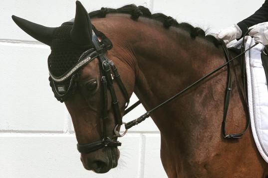 Fin ponny till salu