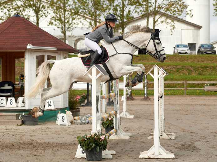 Clear round horse for sale