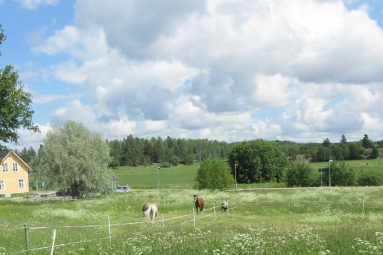 Stallplats för ponny/islänning/mindre häst finns. Bra kommunikationer. Vallentun