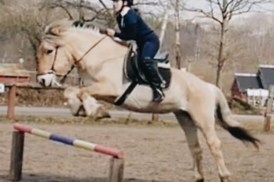Ponny eller liten storhäst sökes på foder