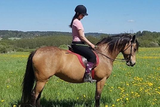 Ponnyer uthyres, med eller utan sällskapshäst.