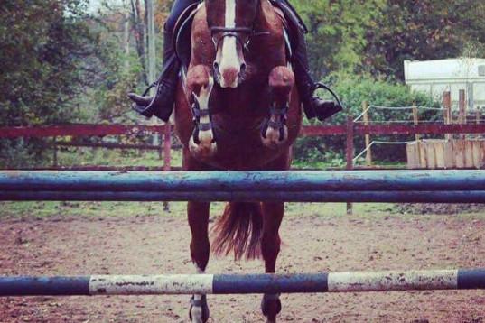 Vi hjälper dig & din häst!
