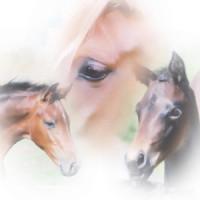 AnR Breedings profilbild