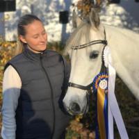 Lillevars Sporthorses ABs profilbild
