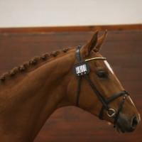Q Equestrian ABs profilbild