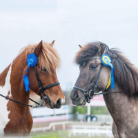 Grinneröds Islandshästars profilbild