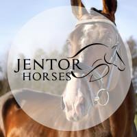 JenTor Horsess profilbild