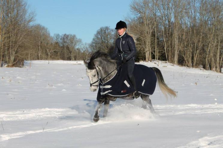 Min hästbakgrund